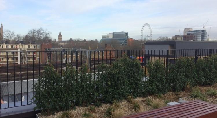 View to Big Ben